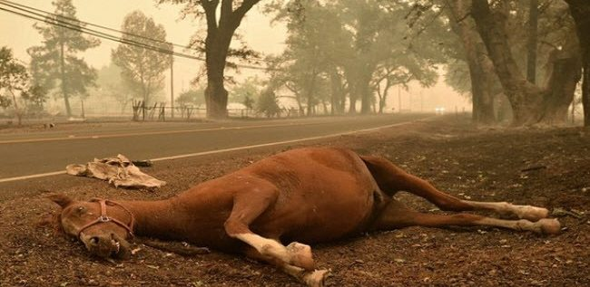 لماذا تُقتل الأحصنة عند كسر ساقها؟