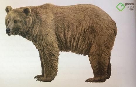 هل عاد الدب البني السوري إلى لبنان؟