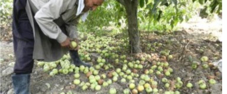 الحويك: على المزارعين الثورة على واقعهم