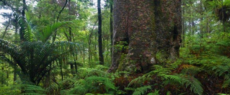 جذع شجرة يذهل العلماء برفضه الموت!