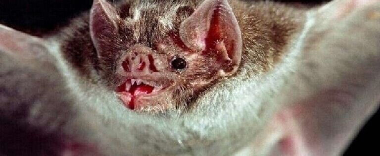 أكاديمي تركي: عواقب قتل الخفافيش وخيمة