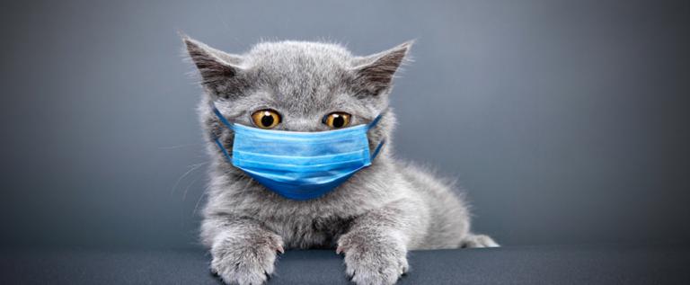 دراسة صينية تكشف نتائج تحذيرية حول مدى نقل القطط لفيروس كورونا!