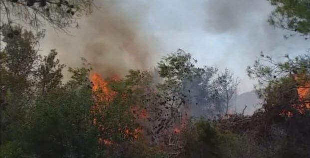 """العدو الصهيوني يتسبب بإشعال حرائق كبيرة في الجانب اللبناني بمنطقة """"اللبونة"""""""