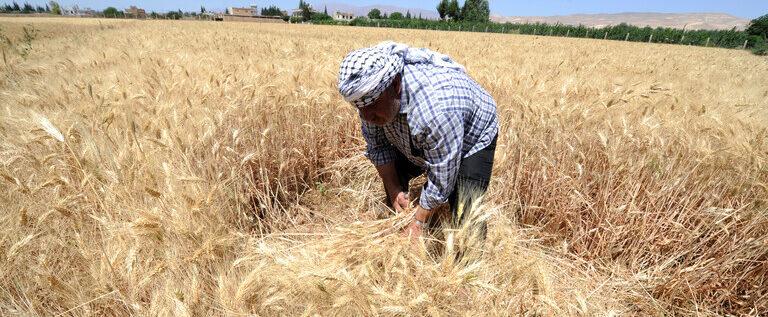 رئيس الوزراء السوري: كمية القمح المشتراة لا تكفي سوى 1.5 شهر