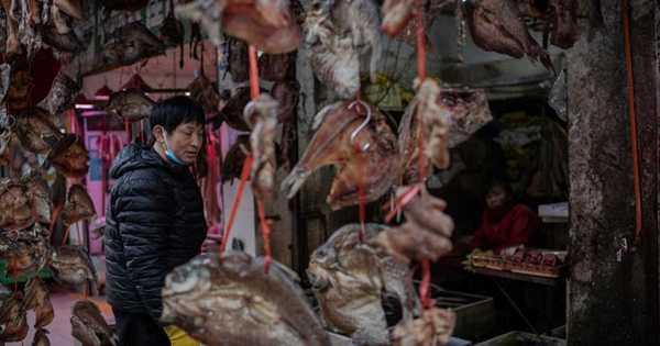 خبراء يحذرون من وباء آخر قادم من الصين