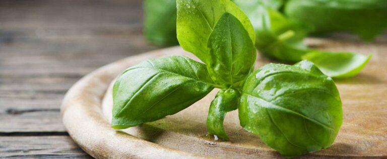 نبات يساعد على استعادة حاسة الشم بعد الإصابة بكورونا
